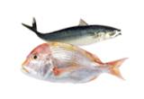 해물/생선
