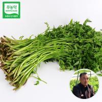 [무료배송]무농약인증 생으로 먹는 청도 한재미나리/청도미나리