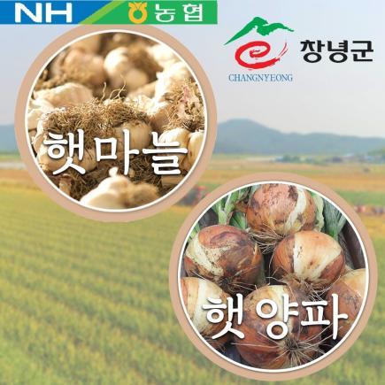 2019 창녕 햇 마늘, 양파 세트 총11kg