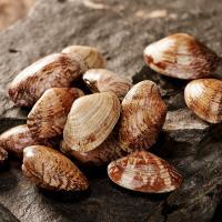 [청해보부상]자연산 바지락 2kg