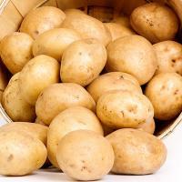 포슬포슬 감자 10kg(중)