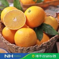 [2020 수확] 제주 햇 황금향 1.5kg*3박스 / 총4.5kg