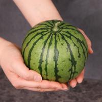 한손에 쏙 못난이 애플수박 1.5kg내외 (2~3입) / 미니수박