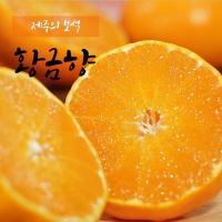 [20년 수확] 제주 햇 황금향 1.5kg*3박스